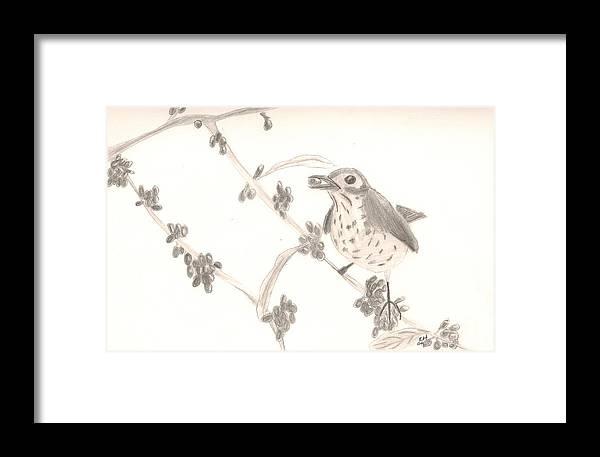 Bird Framed Print featuring the drawing Little Bird by Kristen Hurley