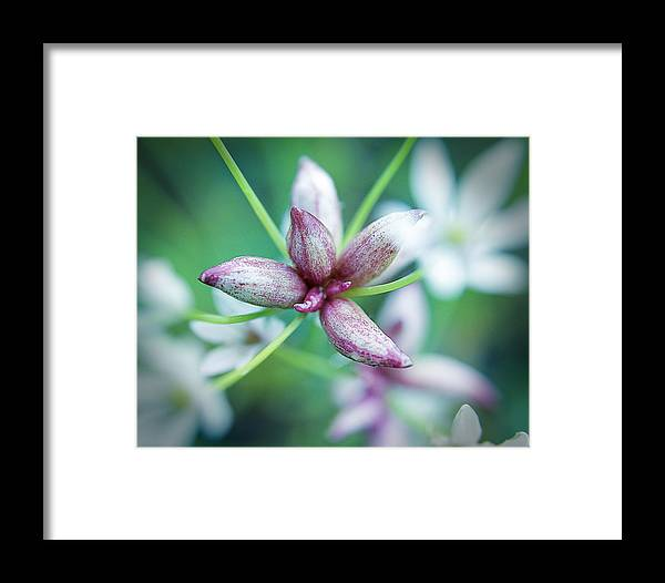 Flowers Framed Print featuring the photograph Little Buds by Paul Gibson