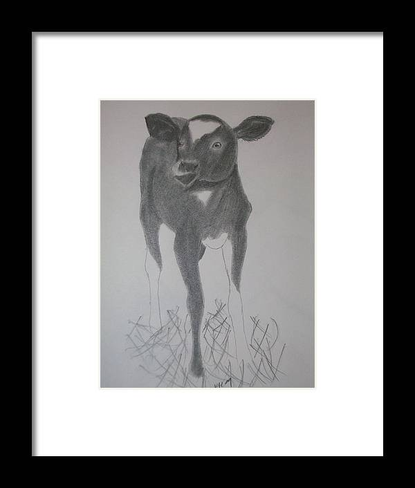 Cow Framed Print featuring the drawing Little Calf by Kristen Hurley