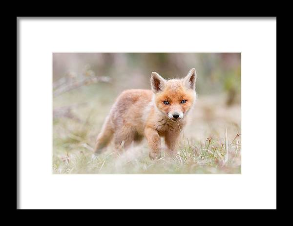 Fox Framed Print featuring the photograph Little Fox Kit, Big World by Roeselien Raimond