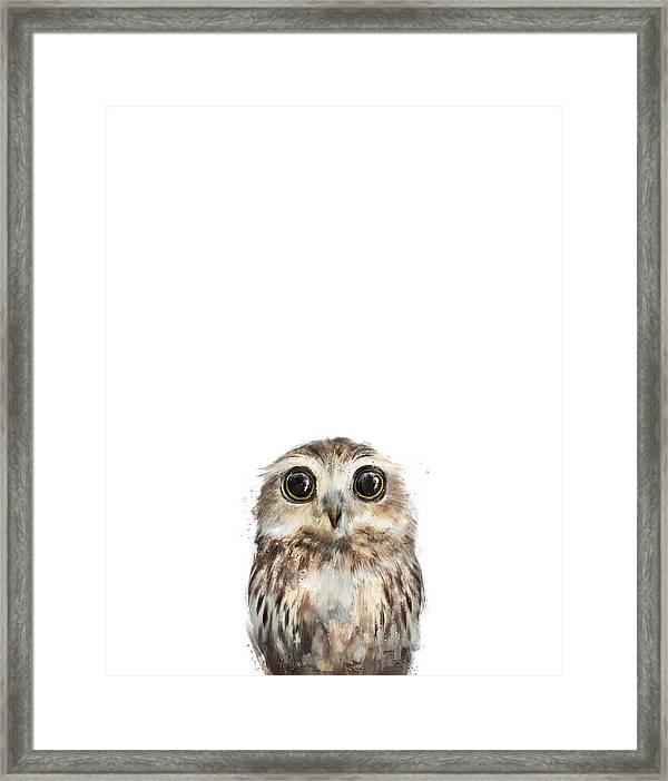 Little Owl Framed Print By Amy Hamilton