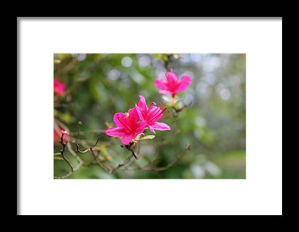 Framed Print featuring the photograph Little Pink by Rosie Knightley