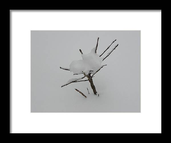 Tree Framed Print featuring the photograph Little Tree In Winter by Richard Mitchell