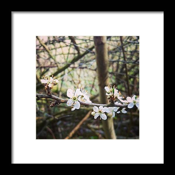 Framed Print featuring the photograph Little White by Rosie Knightley