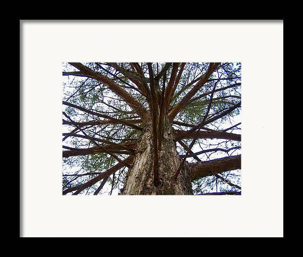 Life Framed Print featuring the photograph Live Spokes by Nadine Rippelmeyer