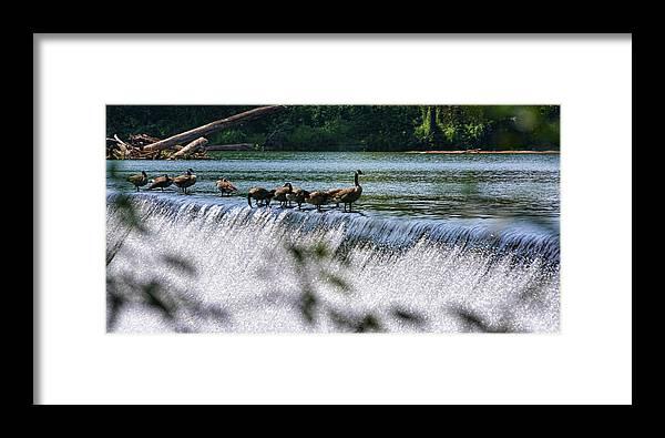 Fowl Framed Print featuring the photograph Living On The Edge by Glenn Grossman