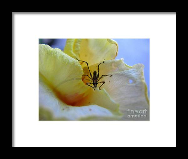 Bug Framed Print featuring the photograph Local Visitor by PJ Cloud