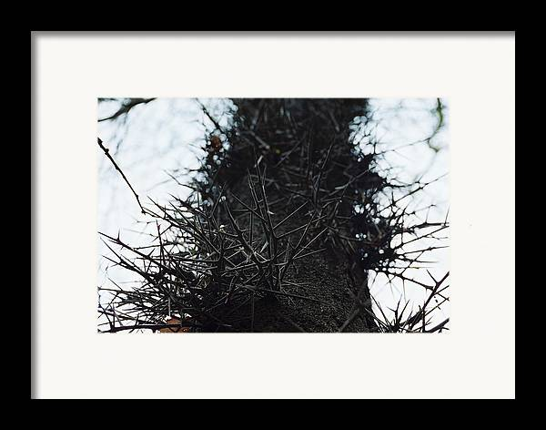 Needle Framed Print featuring the photograph Locust Spines by Jennifer Trone