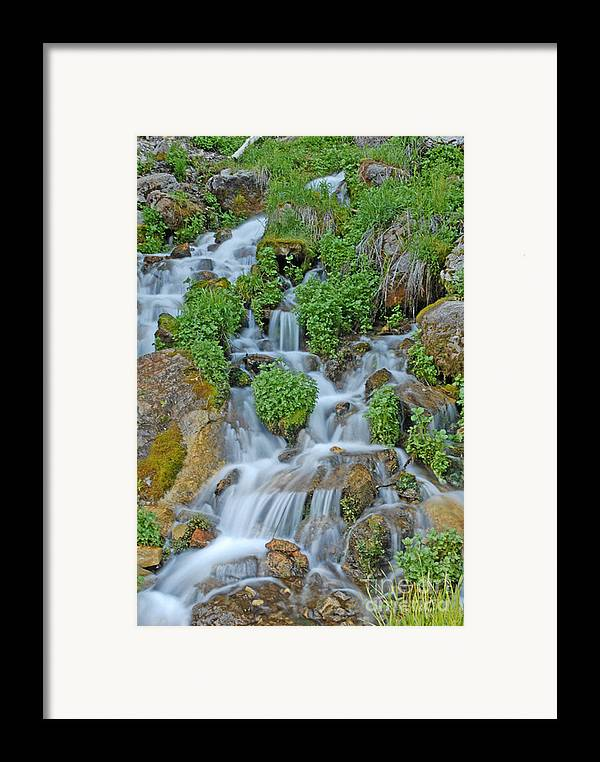 Logan Canyon Framed Print featuring the photograph Logan Canyon Cascade by Dennis Hammer