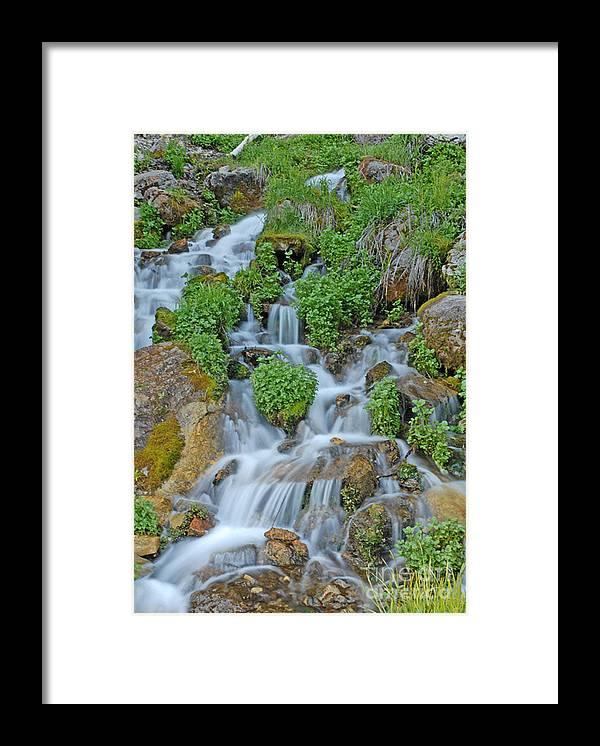 Logan Canyon Framed Print featuring the photograph Logan Canyon Cascade by Dennis Hammer