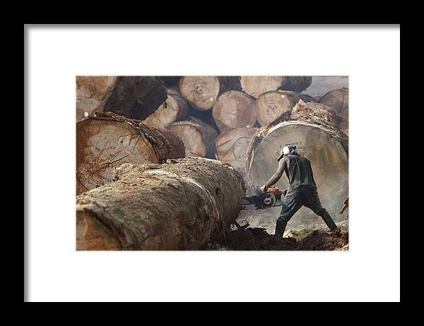 Mp Framed Print featuring the photograph Logger Cutting Tree Trunk, Cameroon by Cyril Ruoso