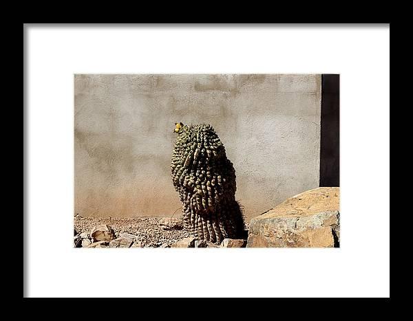 Lone Cactus In Sepia Framed Print featuring the photograph Lone Cactus In Sepia Tone by Colleen Cornelius