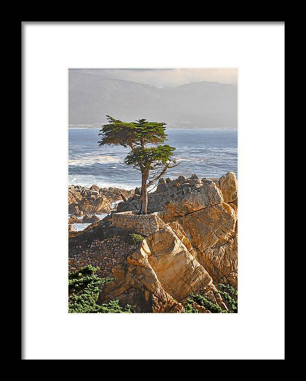 Pine Framed Print featuring the photograph Lone Cypress - The icon of Pebble Beach California by Christine Till