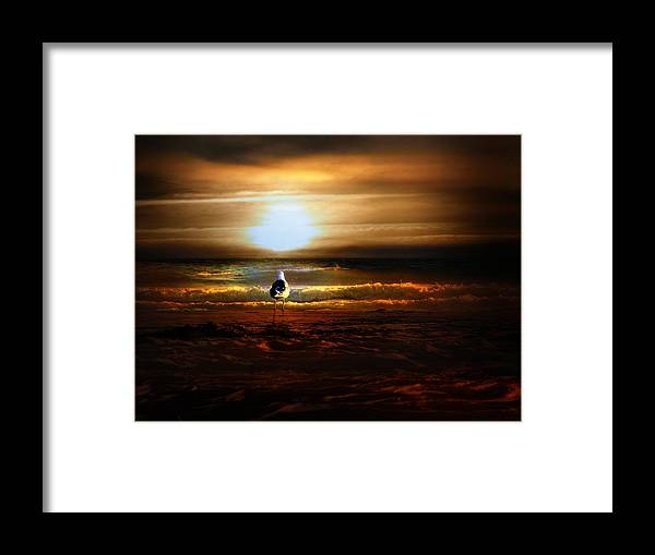 Sunrise Framed Print featuring the photograph Lone Seagull by Gravityx9 Designs