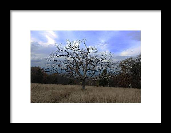Tree Framed Print featuring the photograph Lone Tree by Paul A Williams