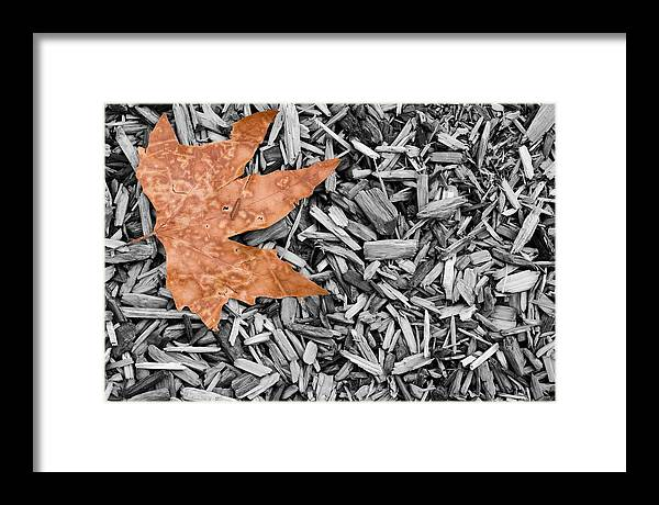 Leaf Framed Print featuring the photograph Lonely Leaf by Walter Beck