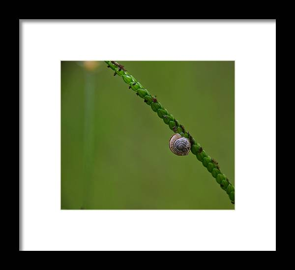 Minimal Framed Print featuring the photograph Lonely Snail -florida by Adrian DeLeon