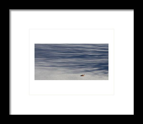Coblitz Leaf Fall Winter Snow Shadow Bush Coblitz White Framed Print featuring the photograph Lonely Winter Leaf by David Coblitz