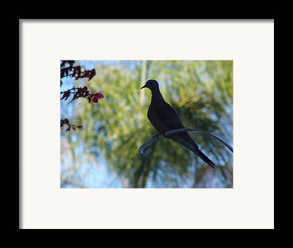 Peace Project Framed Print featuring the photograph Lonesome Dove by Kevin Callahan