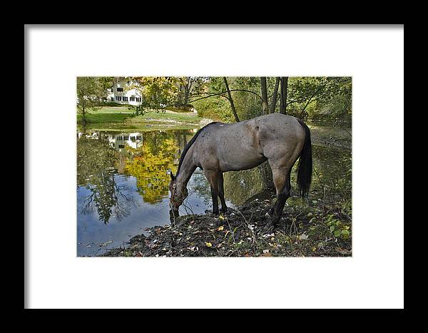 Horse Framed Print featuring the photograph Long Drink by Jack Goldberg