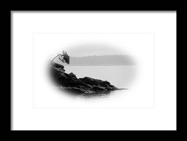 Black Framed Print featuring the photograph Lonley Gull by J D Banks