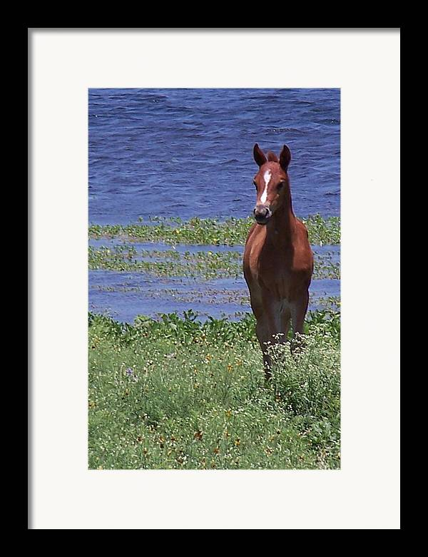 Horse Framed Print featuring the photograph Look At Me by Lilly King