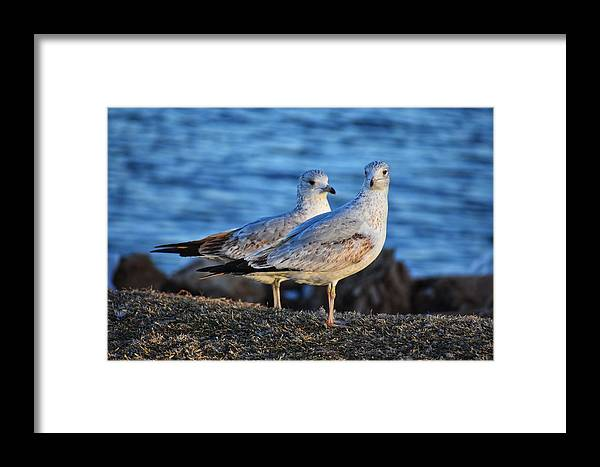 Birds Framed Print featuring the photograph Look At Us by Steve Hayeslip