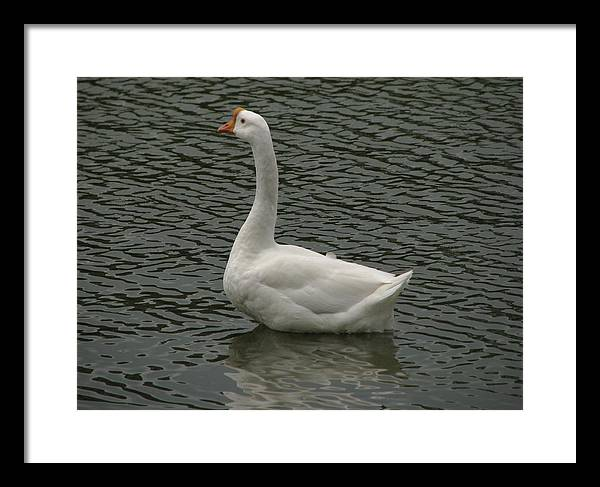 Framed Print featuring the photograph Look At Me by Thomas Kelly