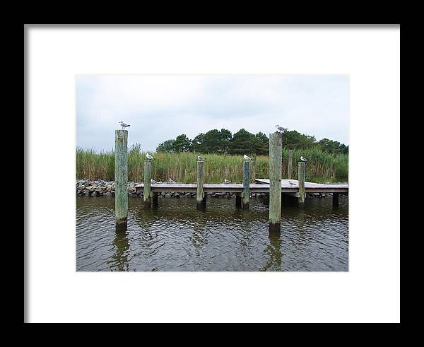 Assawoman Bay Framed Print featuring the photograph Look Left by Kevin Callahan