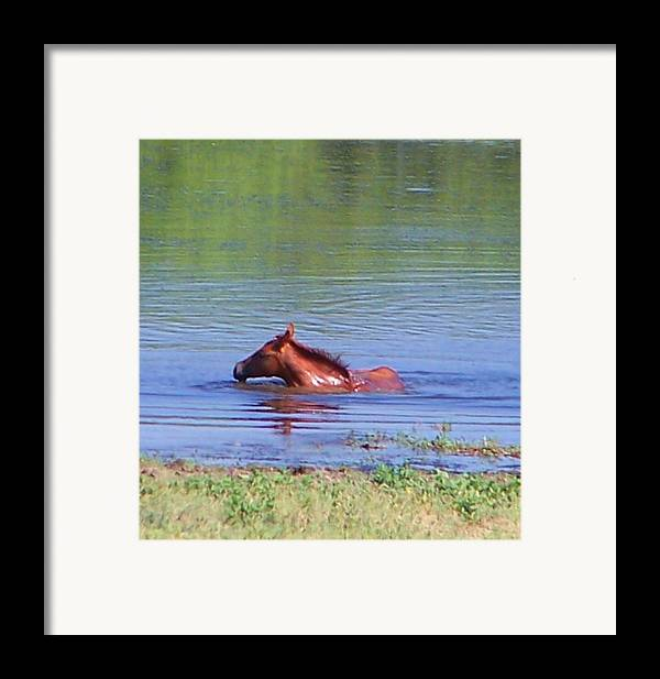 Horses Framed Print featuring the photograph Look Mum I Can Swim. by Lilly King