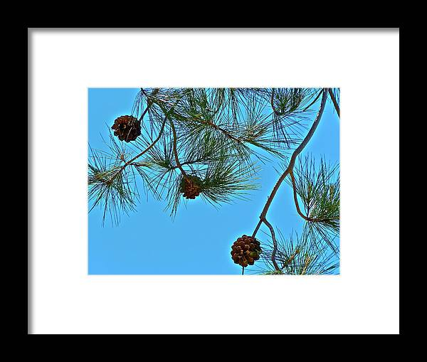 Trees Framed Print featuring the photograph Look Up by Diana Hatcher
