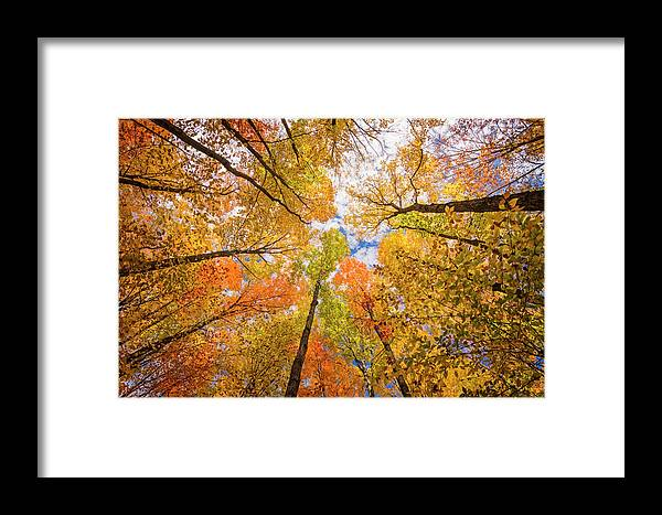 Fall Framed Print featuring the photograph Look Up by Peg Runyan