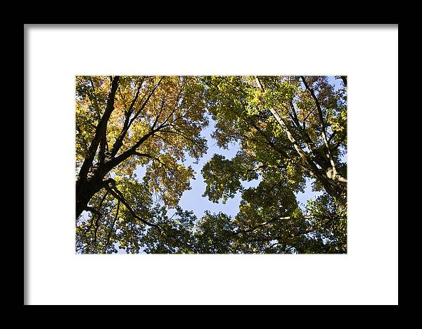 Fall Framed Print featuring the photograph Look Up by Teresa Mucha