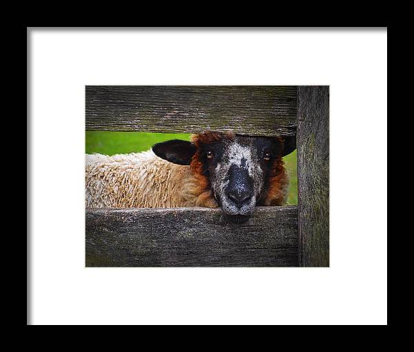 Lookin At Ewe Framed Print featuring the photograph Lookin at Ewe by Skip Hunt