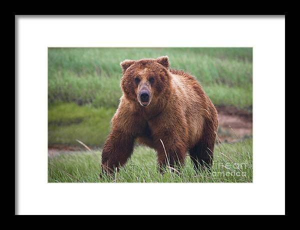 Alaska Framed Print featuring the photograph Looking At You by Greg Probst