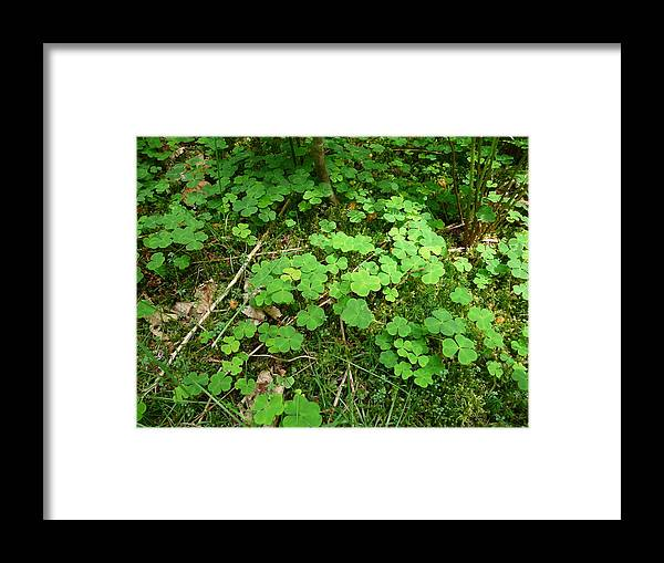 Clover Framed Print featuring the photograph Looking For A Four-leaf Clover by Valerie Ornstein