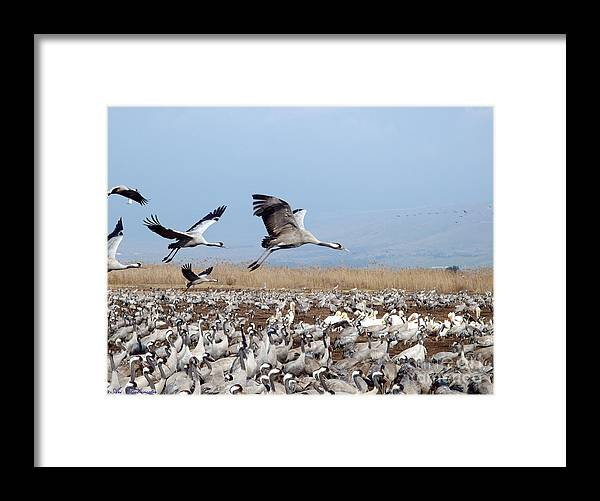 Looking Framed Print featuring the photograph Looking For A Parking Place.... 2 by Arik Baltinester