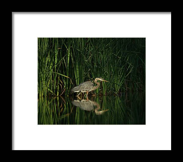 Animals Framed Print featuring the photograph Looking For Breakfast by Ernie Echols