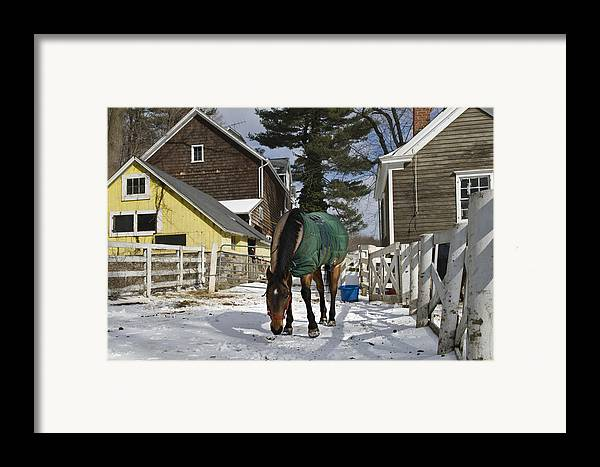 Horse Framed Print featuring the photograph Looking For Stray Hay by Jack Goldberg