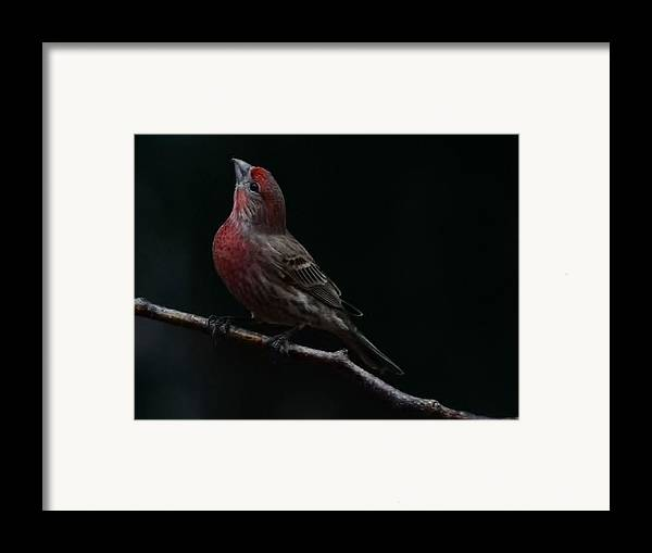Finch Framed Print featuring the photograph Looking Towards Heaven by Gaby Swanson