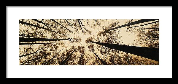 Trees Framed Print featuring the photograph Looking Up by Jack Paolini