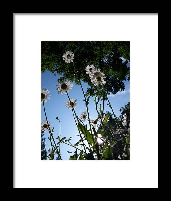 Daisy Framed Print featuring the photograph Looking Up by Ken Day