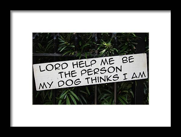 Pet Framed Print featuring the photograph Lord Help Me by Juergen Roth