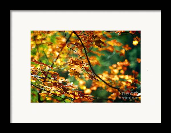 Fall Color Framed Print featuring the photograph Lost In Leaves by Kathy McClure