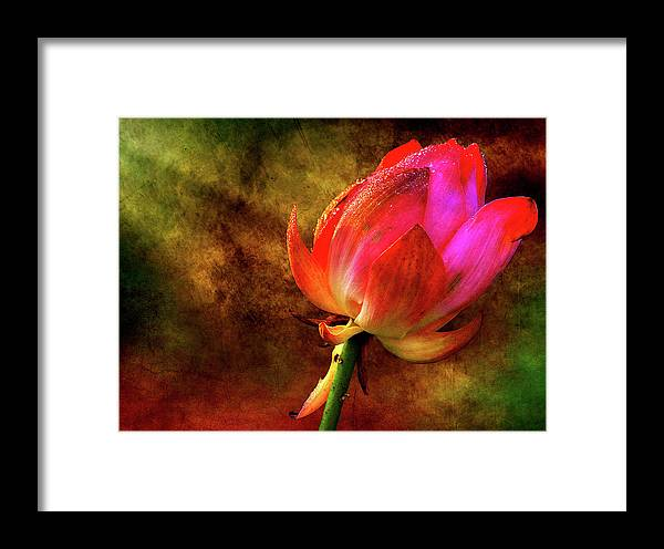 Lotus Framed Print featuring the photograph Lotus In Texture - A Present For A Friend by Rohit Chawla