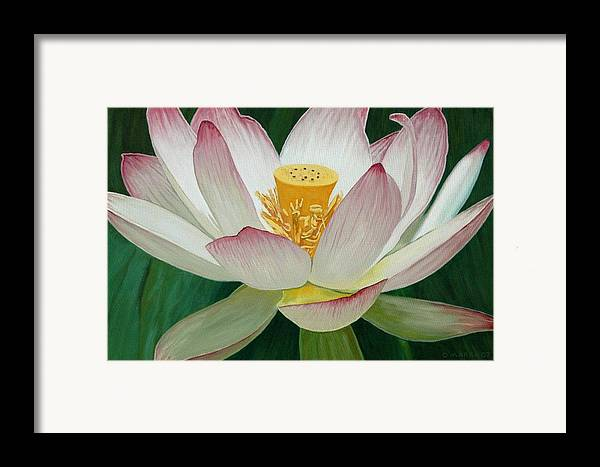 Flower Framed Print featuring the painting Lotus Of Awakening by Allan OMarra