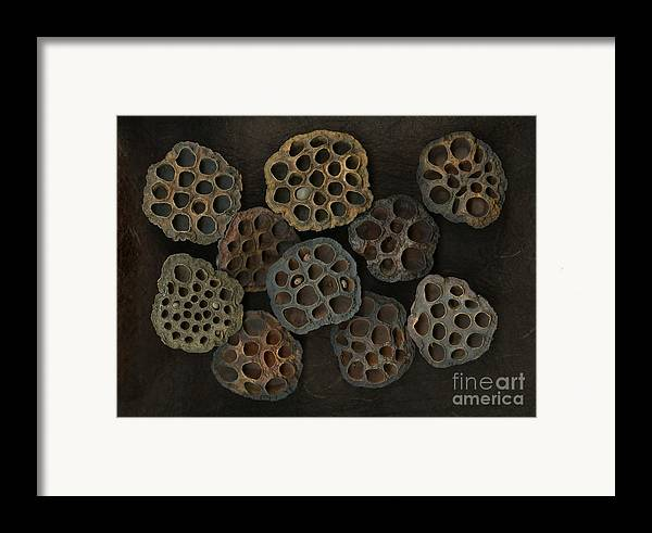 Lotus Framed Print featuring the photograph Lotus Pods by Christian Slanec