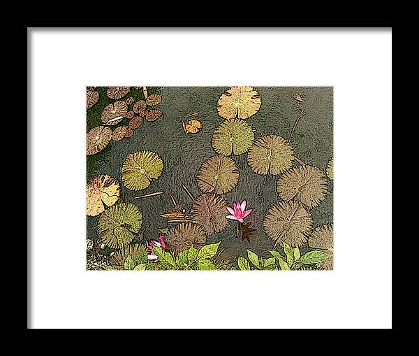 Botanical Framed Print featuring the photograph Lotus Pond by Mark Sellers
