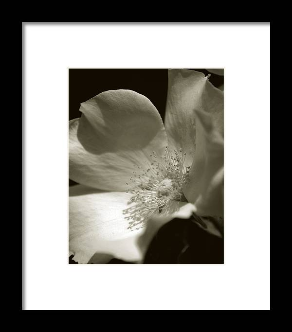 Flower Framed Print featuring the photograph Love By The Moon by Amanda Clark