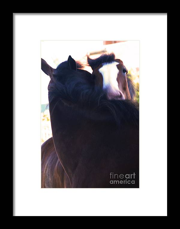 Horse Framed Print featuring the photograph Love by Linda Shafer